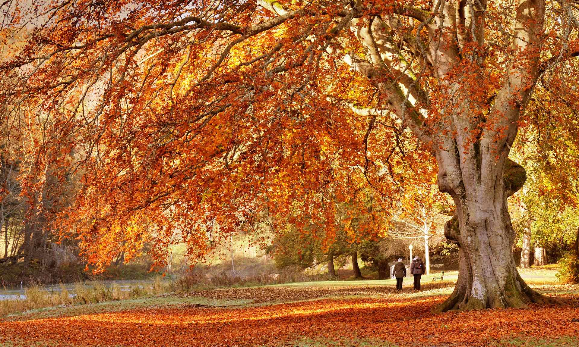 The Spectacular Autumn Colours Around The World - CITI IO